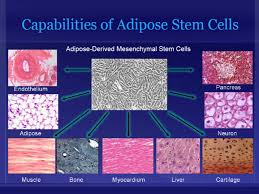 Adipose Cells
